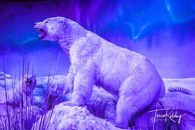 Bandera Natural History Museum-3759