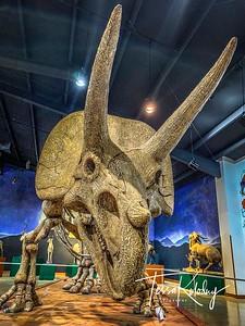 Bandera Natural History Museum_2587