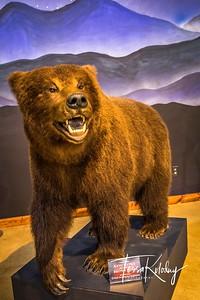 Bandera Natural History Museum-3744