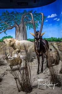 Bandera Natural History Museum-3747