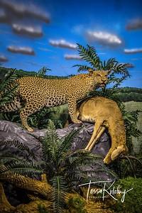 Bandera Natural History Museum-3753