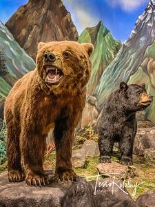 Bandera Natural History Museum_2581