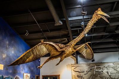 Bandera Natural History Museum-3778