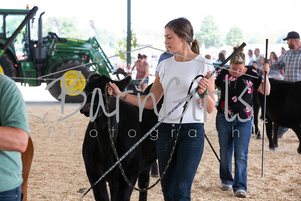 2019 Barrie Fair - Blue Water Angus Show
