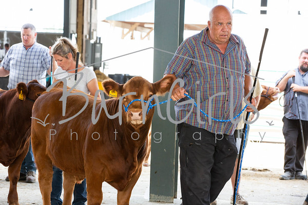 2019 Barrie Fair - Central Ontario Limousin Show