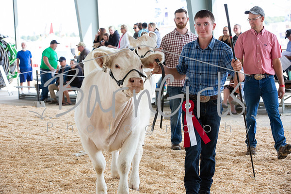 2019 Barrie Fair - Charolais Point Show