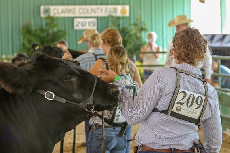 2019 Clarke County Fair Beef show