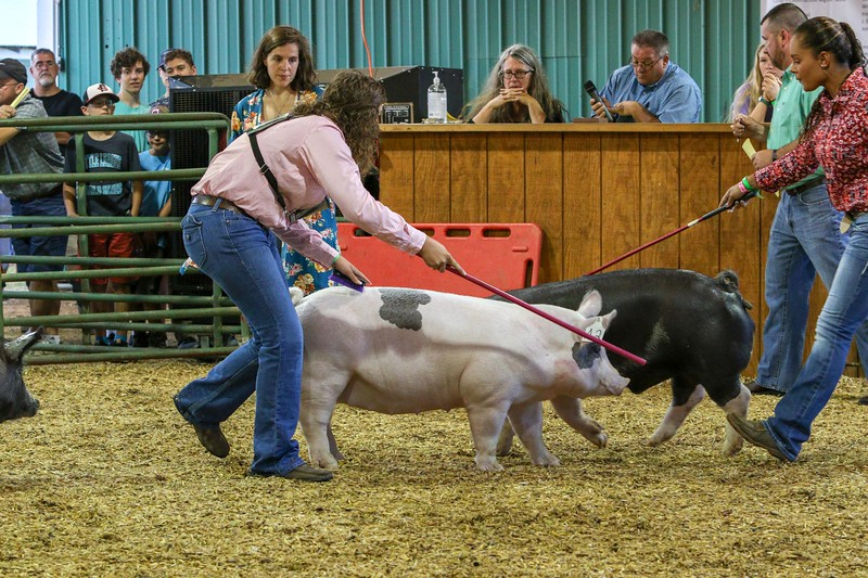 2019 Clarke County Fair Swine Show