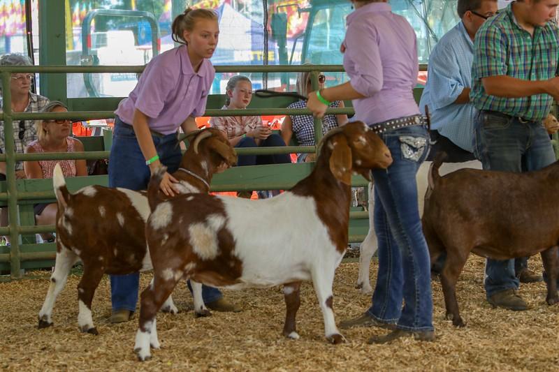 2019 Clarke Fair Goats