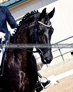 GSD 19 Fleur Noir 9342