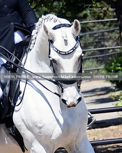SVE 19 Royal Chrome 208