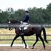 SVE 19 Lady Lara 3017