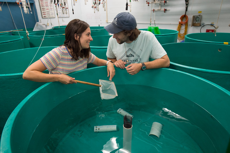Graduate students Amy Cavanaugh and Ben Szczygiel working in Great Lakes Center lab at Buffalo State College.