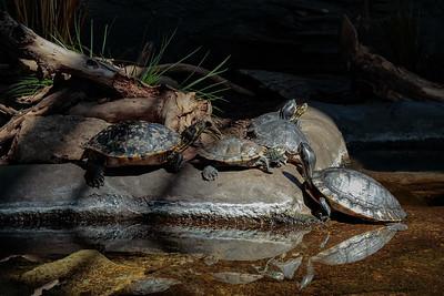 DA047,DN,TurtleRennaissance