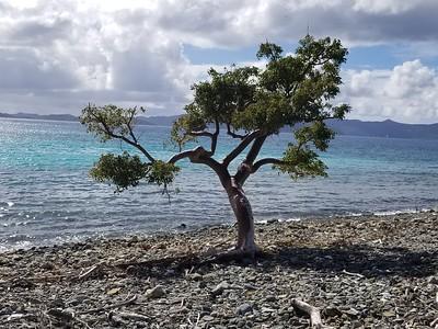 Tortola - Jost Van Dyke (22)