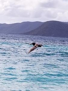 Tortola - Jost Van Dyke (18)