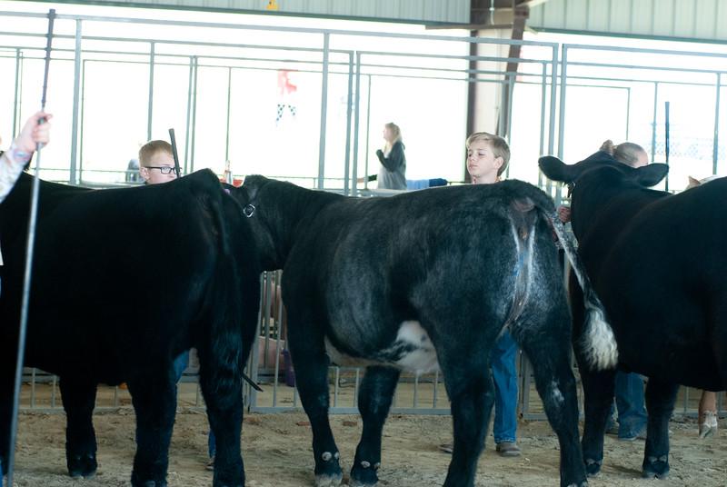 20190428_flinthills_classic_cattle-22