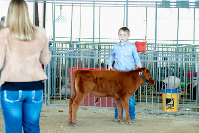 20190428_flinthills_classic_cattle-7