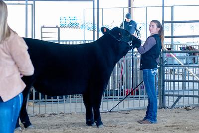20190428_flinthills_classic_cattle-15