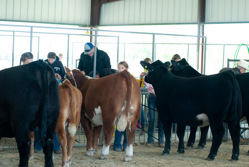 20190428_flinthills_classic_cattle-21