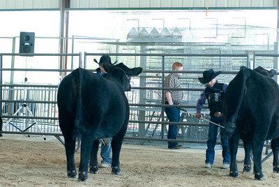 20190428_flinthills_classic_cattle-20