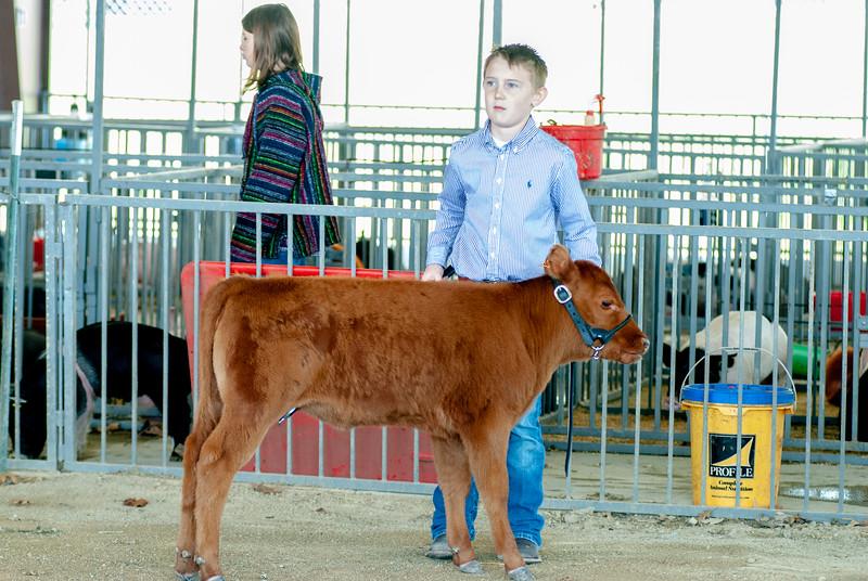 20190428_flinthills_classic_cattle-6