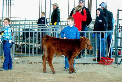 20190428_flinthills_classic_cattle-10