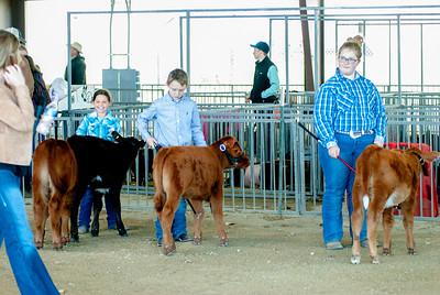 20190428_flinthills_classic_cattle-3