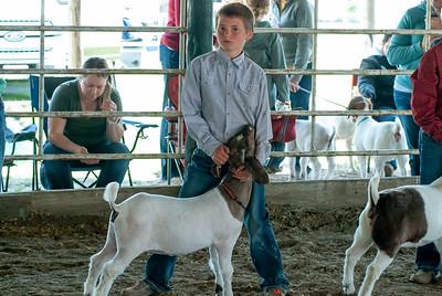 20190428_flinthills_classic_goats-20