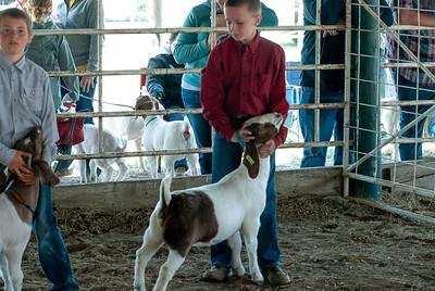 20190428_flinthills_classic_goats-19