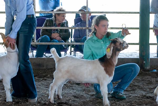 20190428_flinthills_classic_goats-22