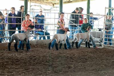 20190428_flinthills_classic_sheep-13