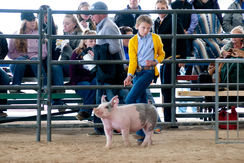 20190428_flinthills_classic_swine-20