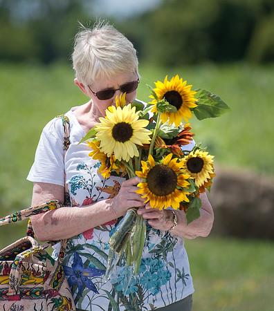 190801 Sunflowers 3