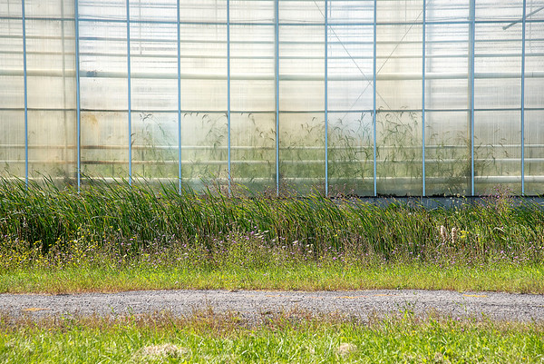 James Neiss/staff photographer <br /> Lewiston, NY - Only weeds appear to be growing inside a greenhouse at H2Grow. H2Grow appears to have shut down operations and the building no longer occupied.