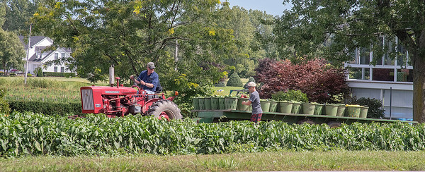 James Neiss/staff photographer <br /> Cambria, NY - Tom and David Freatman of Freatman Farm, gather harvested vegetables in a N. Ridge Road field. Farms all across Niagara County are busy gathering up their summer crops.