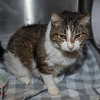 "James Neiss/staff photographer <br /> Sanborn, NY - Zelda is a 15 year old kitty who needs a good home. As the newspaper Pet of the Week, her adoption fee is half off.  <br /> <br /> Contact the SPCA at (716) 731-4368 or  <a href=""http://www.niagaraspca.org"">http://www.niagaraspca.org</a> for more information on how you can give a cat or dog their forever home."