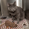 "James Neiss/staff photographer <br /> Sanborn, NY - Smokey the cast wants to be your champion mouser. Smokey is an 8 year old kitty with some special needs looking for her forever home. As the newspaper Pet of the Week, her adoption fee is half off. <br /> <br /> For more information, contact the SPCA at (716) 731-4368 or  <a href=""http://www.niagaraspca.org"">http://www.niagaraspca.org</a>."