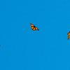190828 Butterfly Enterprise 4