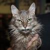 191113  Pet of the Week