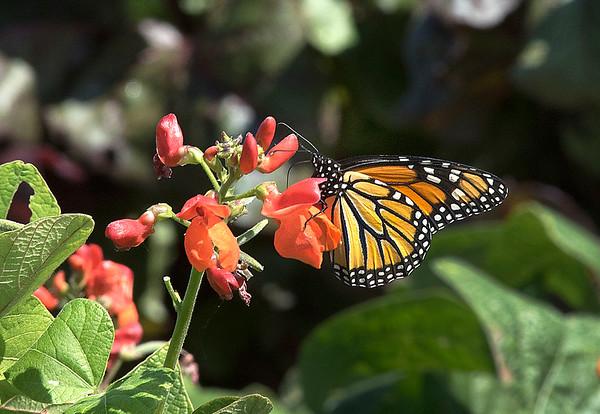 190828 Butterfly Enterprise 1