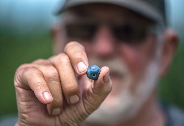 190716 Blueberries 3