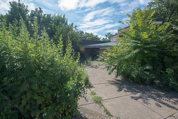 190722 Overgrown Center 3