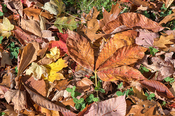 James Neiss/staff photographer <br /> Niagara Falls, NY - A beautiful leaf salad litters the floor in places along the gorge at Whirlpool State Park.