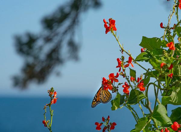 190828 Butterfly Enterprise 3