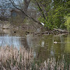 James Neiss/staff photographer <br /> Porter, NY - The water levels of 6 Mile Creek near Lake Ontario currently seem normal. There are concerns that high lake levels will affect area wetlands.