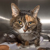 """James Neiss/staff photographer <br /> Sanborn, NY - Abby is 17 years old and just wants a nice home and to sit on your lap! As the newspaper Pet of the Week, her adoption fee is half off. <br /> <br /> For more information, contact the SPCA at (716) 731-4368 or  <a href=""""http://www.niagaraspca.org"""">http://www.niagaraspca.org</a>."""