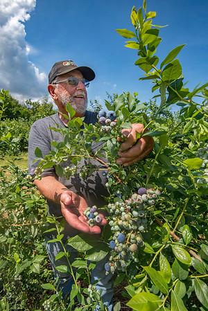 190716 Blueberries 2