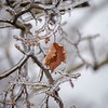 James Neiss/staff photographer <br /> Niagara Falls, NY - Freezing rain continued on Thursday coating the trees and most of everything else at Oakwood Cemetery.