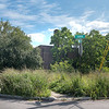 James Neiss/staff photographer <br /> Niagara Falls, NY - Neighbors are complaining about the overgrowth at the former Niagara Community Center and Girls Club on Center Street, front and back.